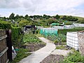 Allotments off Azalea Way, Newburn - geograph.org.uk - 1985816.jpg