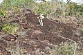 Alto Araguaia - State of Mato Grosso, Brazil - panoramio (1107).jpg