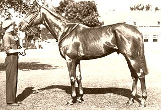 Alycidon British-bred Thoroughbred racehorse