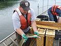 American eel (6149968225).jpg