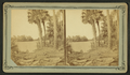 An Alligator sunning himself on the St. John's River, Fla, from Robert N. Dennis collection of stereoscopic views.png