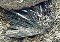 Andorite-Berthierite-224153.jpg