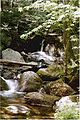 Andorra Forest, New Hampshire.jpg