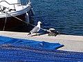 Andratx, Balearic Islands, Spain - panoramio (205).jpg