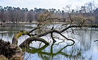 Anglerteich - Walldorf - Mörfelden-Walldorf - Germany - 02.jpg