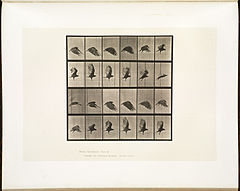 Animal locomotion. Plate 765 (Boston Public Library).jpg