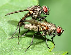 Terrestrial animal - Arthropods (such as flies) are the most abundant terrestrial animals by species count.