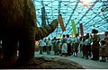 Apatosaurus with Visitors - Dinosaurs Alive Exhibition - Science City - Calcutta 1995-June-July 498.JPG