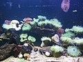 Aquarium de st malo - panoramio (1).jpg