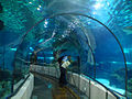 Aquarium of Barcelona.jpg