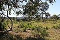 Araguainha - State of Mato Grosso, Brazil - panoramio (1087).jpg