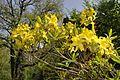 Arborétum-Mlyňany-flower1.jpg