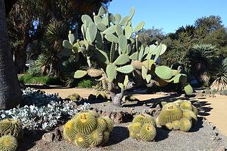 Arizona Cactus Garden - Another view of the garden