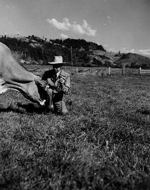 KOAC (AM) - Arnold Ebert of KOAC interviewing a cow (1950).