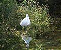 Aswan Nile bird.jpg