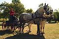 Attelage Percheron Parcour Cl J weber0002 (23715719199).jpg