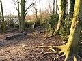 Attenborough Nature Reserve Path - geograph.org.uk - 1126904.jpg