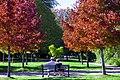 Autumn, Stanley Park Oct, 2015 - 21767537718.jpg