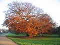 Autumn on the Millennium Way - geograph.org.uk - 98925.jpg