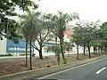 Avenida Brasilusa, Lateral Plaza Avenida Shopping - São José do Rio Preto-SP. - panoramio.jpg