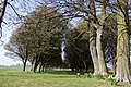 Avenue of trees near Radley College - geograph.org.uk - 1232466.jpg