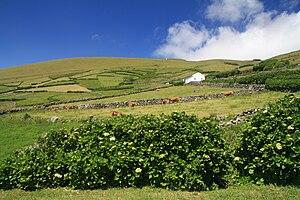 Vila do Corvo - One of the gentler slopes along the eastern coast of the island, around Calçadas