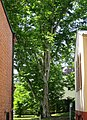 Bäume 131.JPG
