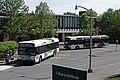 BC Transit buses.jpg