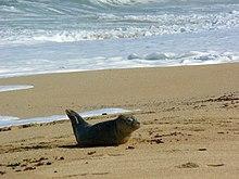 seal beach christian personals Seal beach, ca основана июл 4, 2015 о orange county christian singles 620 christian singles finding your inner chef 967 fun friends.