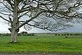Ballinillaun - geograph.org.uk - 1266285.jpg