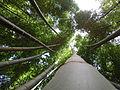 Bamboo of Gochang, Korea.JPG