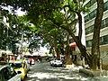 Bangalore Sanjay nagar street trees 4.jpg