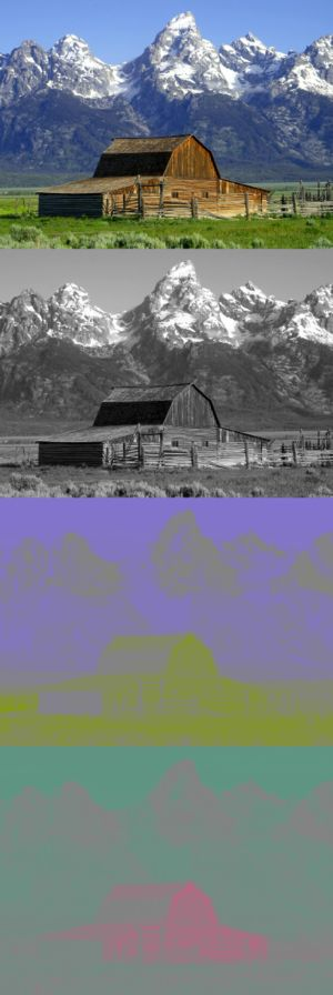 YCbCr - A color image and its Y, CB and CR components. The Y image is essentially a greyscale copy of the main image.