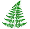 Barnsley fern mutated -Leptosporangiate fern.PNG