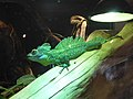 Basiliscus plumifrons Muse.jpg