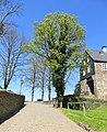 Baum am Schlossaufgang.JPG