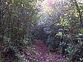 Baxter-creek-heath-tunnel-nc1.jpg