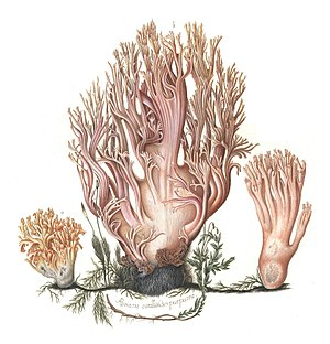 Johan Theodor Holmskjold - Image: Beata Ruris Otia Fungis Danicis Impensa 1