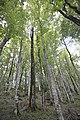 Beauty of National Park Biogradska Gora, Montenegro 04.jpg