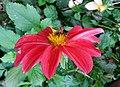 Bee on the Flower.jpg