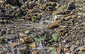 Bergtocht van Homene Dessus naar Vens in Valle d'Aosta. Waterstroompje in bijna droge rivierbedding 02.jpg