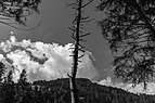 Bergtocht van Tschiertschen (1350 meter) via de vlinderroute naar Furgglis 07.jpg