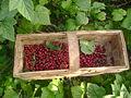 Berrys.JPG