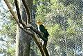Beto Carrero Zoo - panoramio (25).jpg