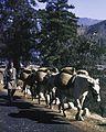 Bhutan1980-26 hg.jpg