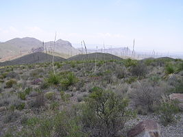 Big Bend National Park PB112588.jpg
