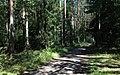 Bike trail between Grabacz and Kopaniarze - panoramio (3).jpg