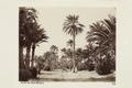 """Bild från familjen von Hallwyls resa genom Algeriet och Tunisien, 1889-1890. """"Parken i gamla Biskra - Hallwylska museet - 91942.tif"""