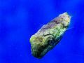 Birch Aquarium10.jpg
