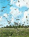 Bird flocks Bird Island Seychelles.jpg